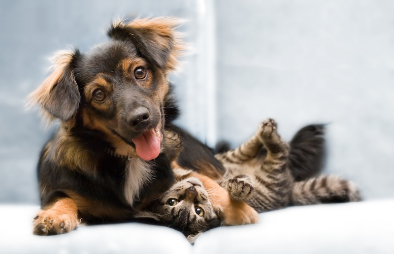 Los beneficios de una mascota en el hogar