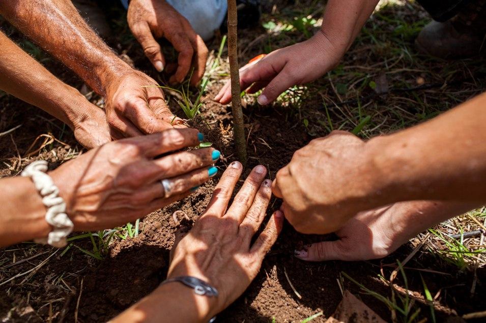 Esfuerzo comunitario para restaurar Bosque del Pueblo