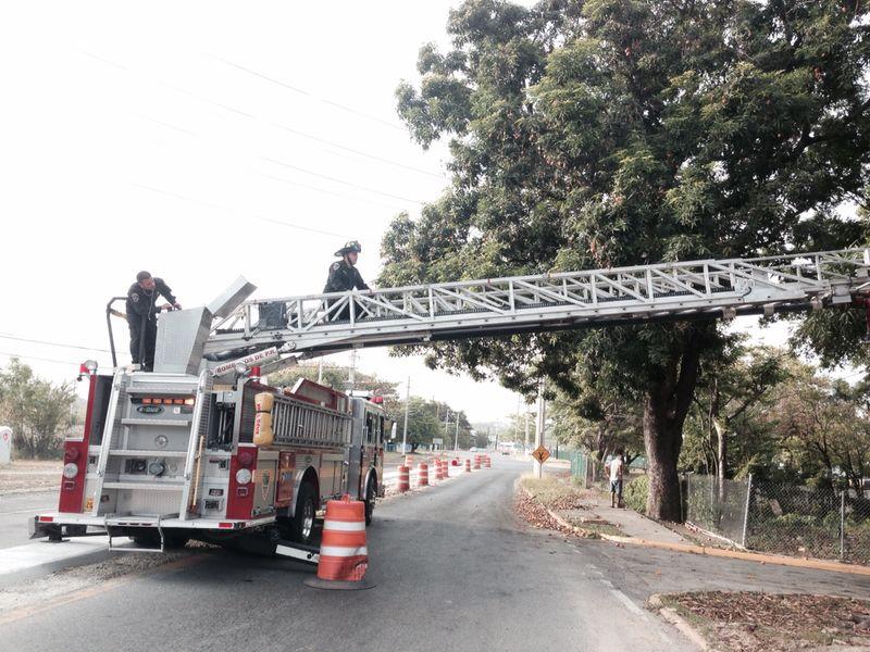 Bomberos consiguen rescatar gatos en dos lugares de Ponce